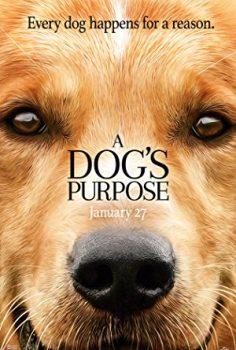 Can Dostum – A Dog's Purpose